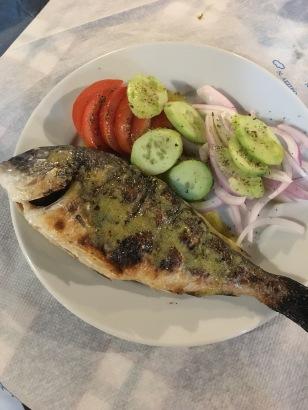 Gitl-Head Seabream
